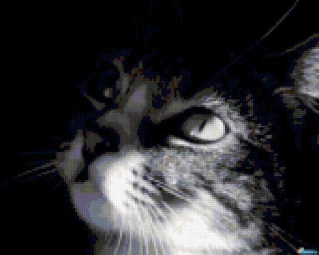 К схеме вышивки «Взгляд кота»