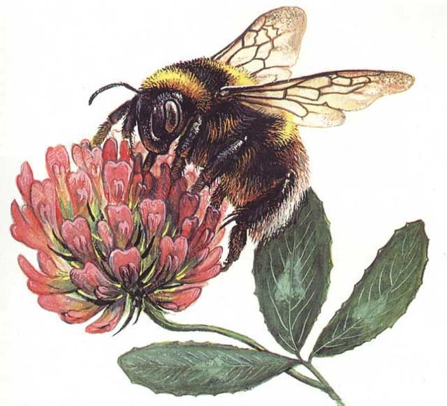 Пчела на клевере, оригинал