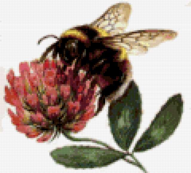 Пчела на клевере, предпросмотр