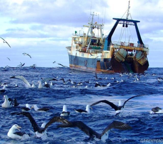 Море, чайки и корабль, лодка,