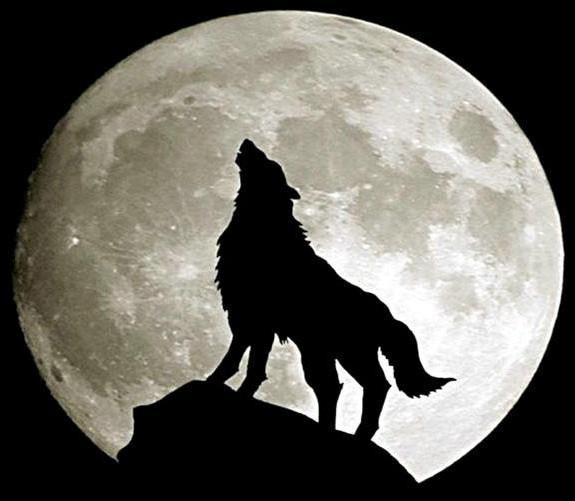 Одинокий волк 3, природа,