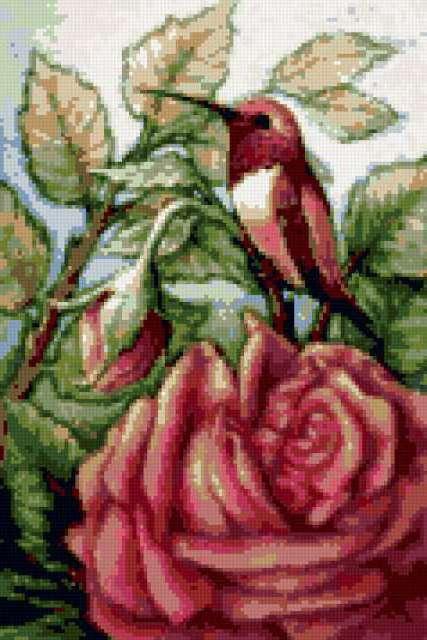 Колибри и роза, колибри, птица