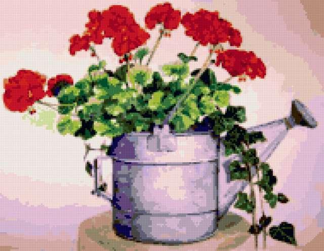Герань, герань, плющ, цветы,