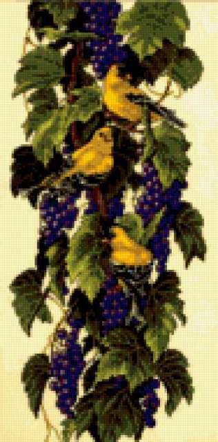 Птицы и виноград, предпросмотр