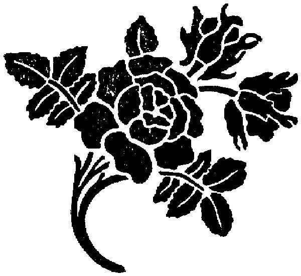Черная роза, роза, розы,