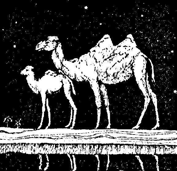 Верблюды, оригинал