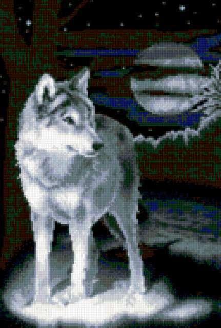 Волк и луна, волк, животное,
