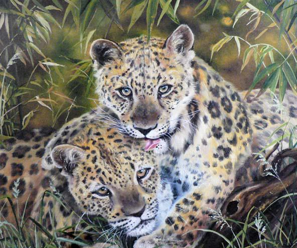 Леопарды, леопарды, животные