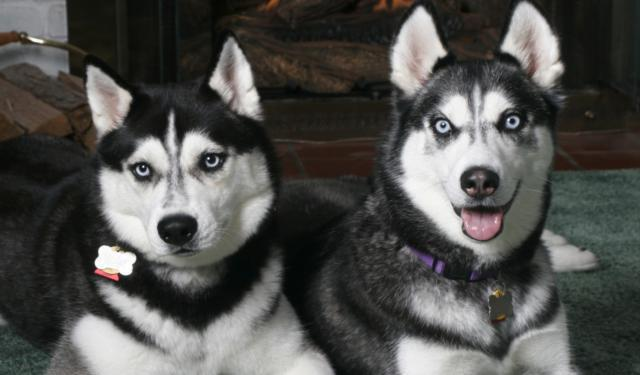 Лайки, собаки, лучший друг