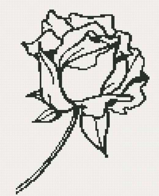 Роза монохром, предпросмотр