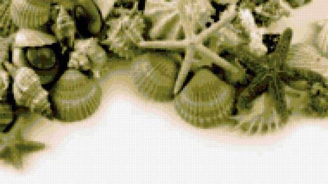 Ракушки, ракушки, море
