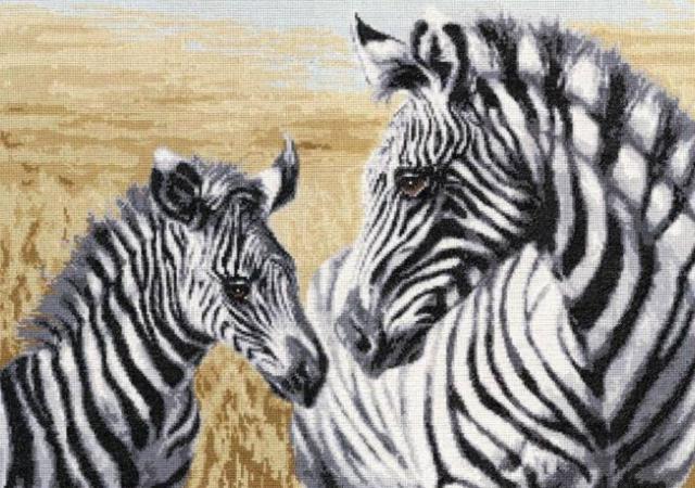 Зебры, зебры, животные