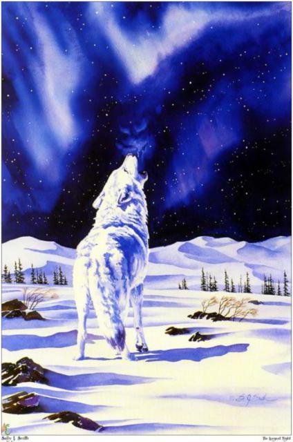 Волк и северное сияние,