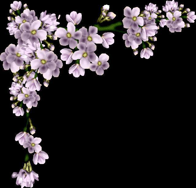 Цветы уголок, цветы