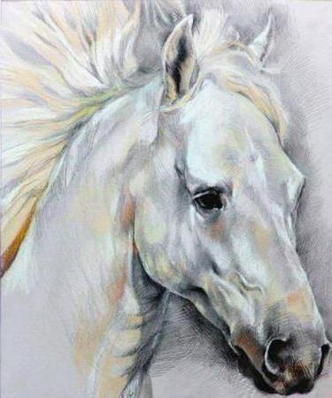 кони, конь, лошади, лошадь,