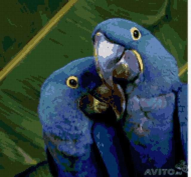 Синие ары, предпросмотр