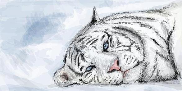 Бенгальский тигр, оригинал