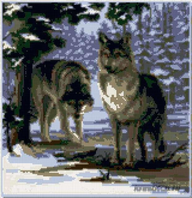 Волки в лесу, животные, волки,