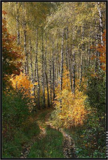 Лесной пейзаж, оригинал