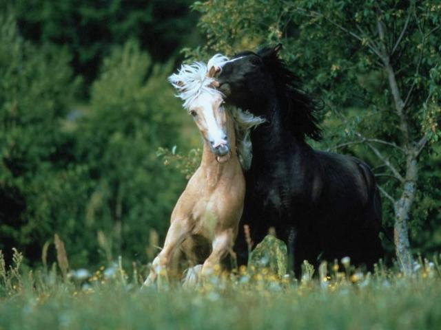 Пара лошадей, природа