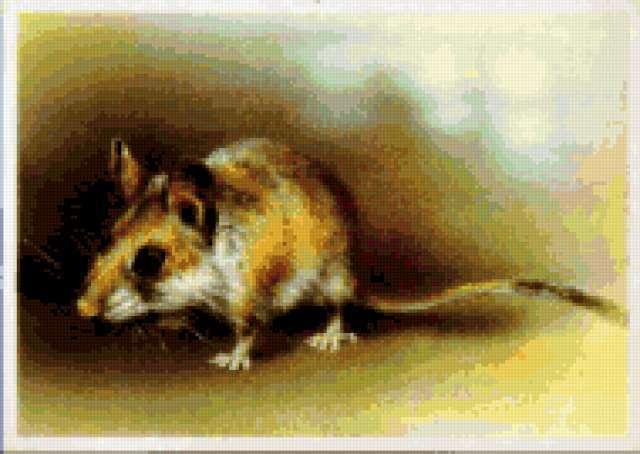 Туркменский мышевидный хомячок
