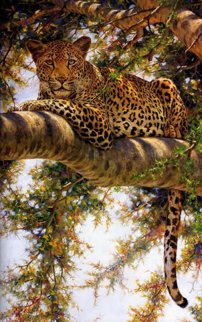 Леопард на дереве, живопись,