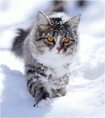 Зимний кот, оригинал