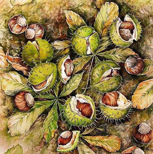 плоды, каштан, орехи