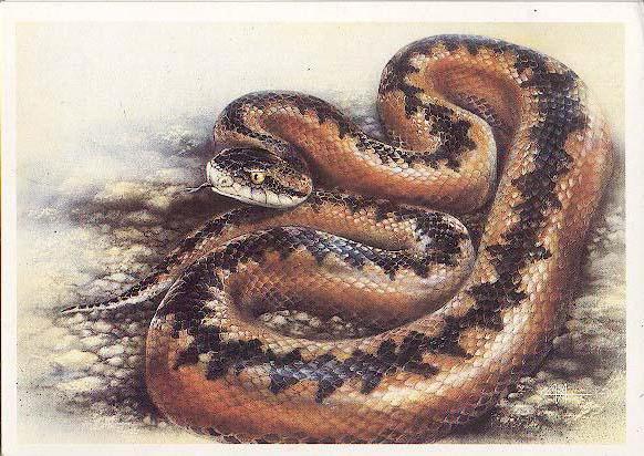 Змея, оригинал