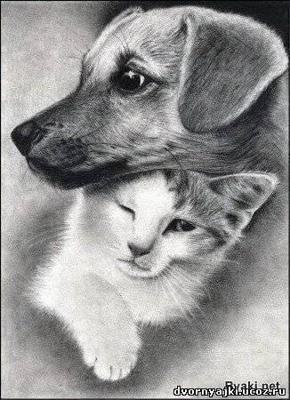 Неразлучные друзья, котёнок