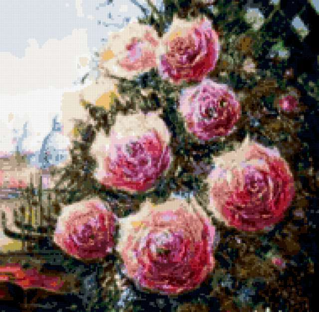 Плетистая роза, предпросмотр
