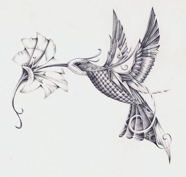 Колибри, рисунок