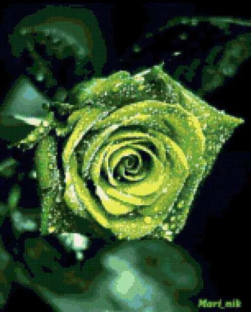 Зеленая роза,четкая схема,