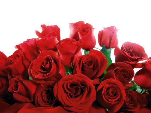 Красные розы на белом фоне,