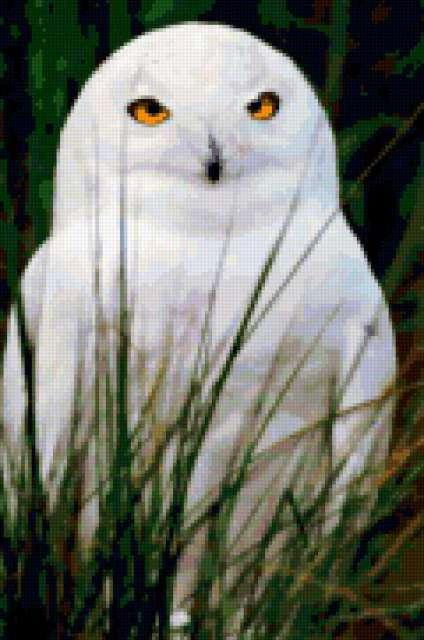 Белая сова, предпросмотр