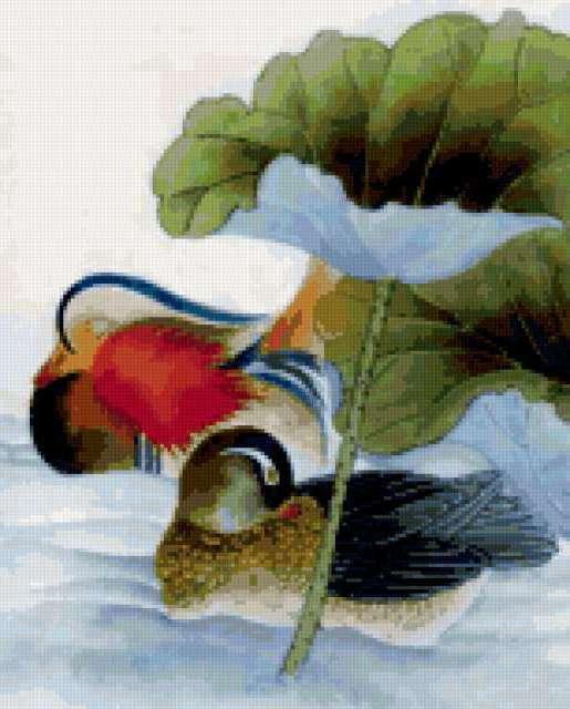 Утки мандаринки, предпросмотр