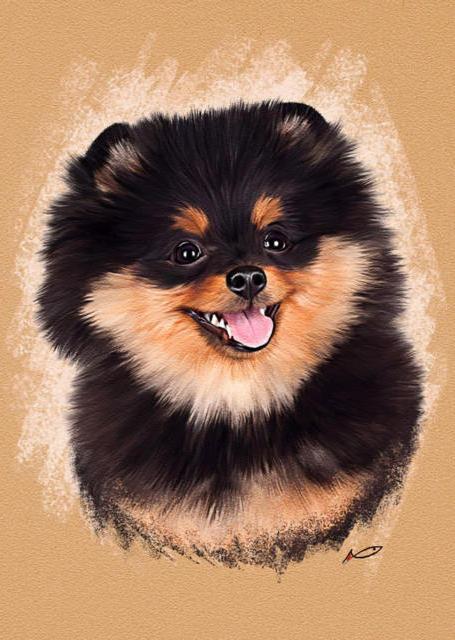 Собака-улыбака, шпиц