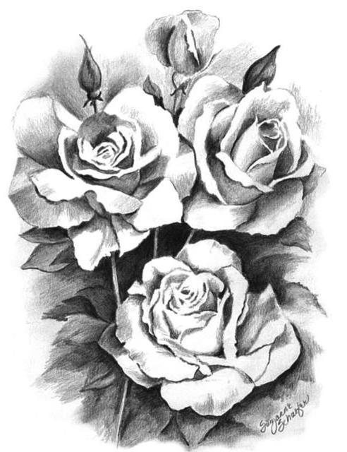 Оригинал - Схема вышивки «Розы