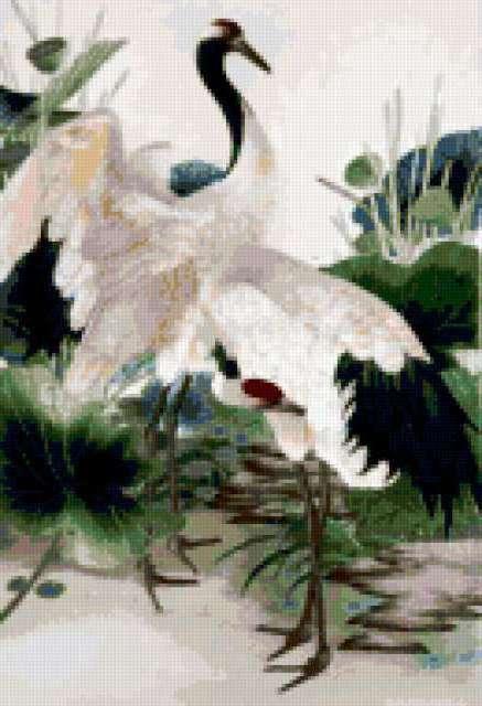 Белые цапли, предпросмотр