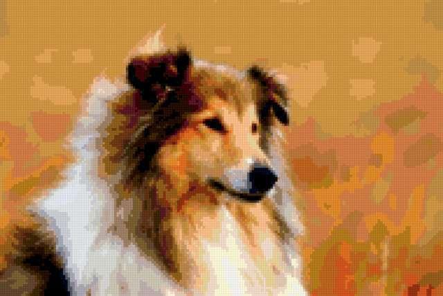 Собака колли, предпросмотр