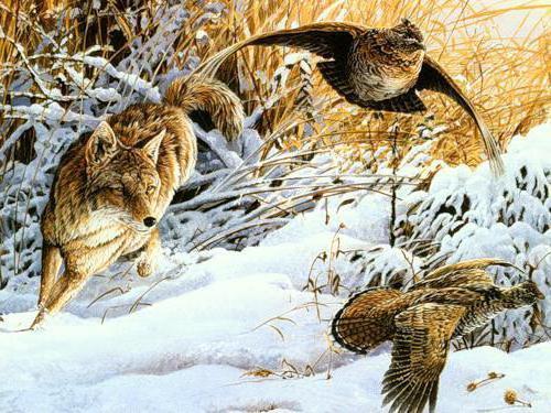 Охота на рябчиков, природа,