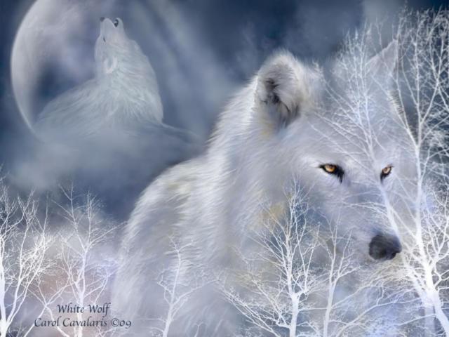 животные, волк, зима, снег