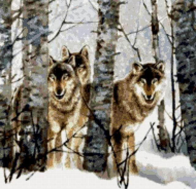 Волки в зимнем лесу,