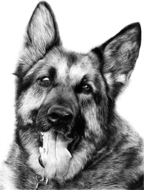 Собаки карандашом 5, оригинал