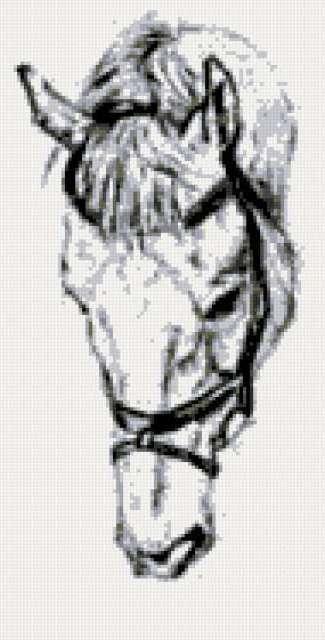 Голова коня, лошадь, конь,
