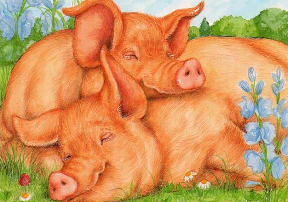 свинки, животные