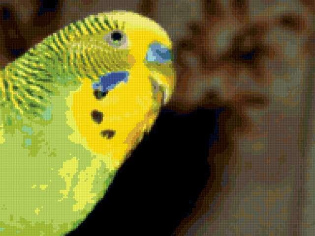 Волнистый попугай, попугай