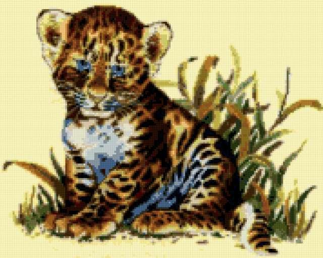 Голубоглазый тигрёнок