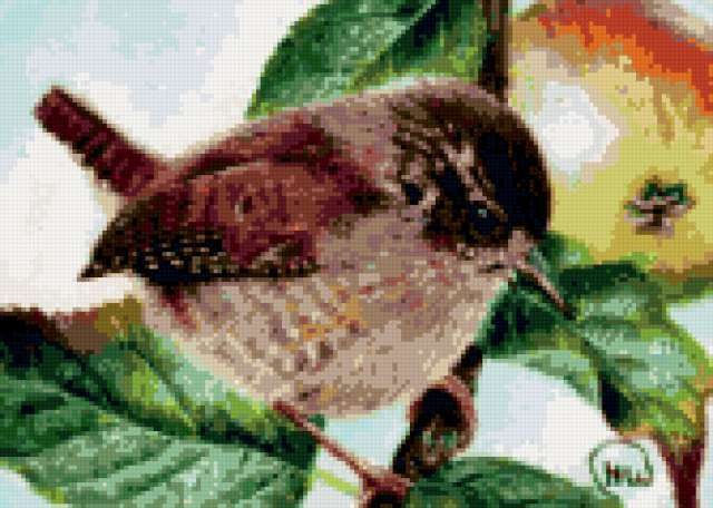 Воробушек, птички, птица
