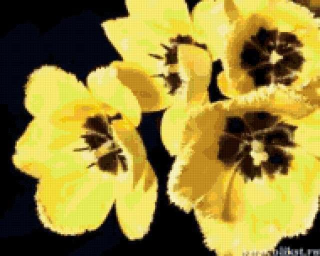 Желтые тюльпаны на черной